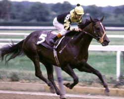 Derby winner's blueblood ancestry