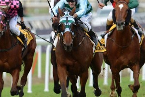 Gondokoro belts Qld Oaks field