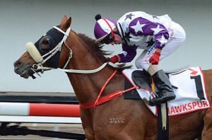 Jim Cassidy triumphant on Hawkspur in Qld Derby