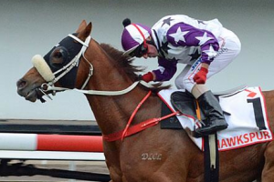 Hawkspur dominant in Qld Derby