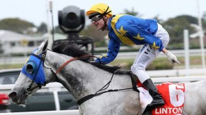Nick Hall gives Linton the perfect ride to win G1 Stradbroke at Eagle Farm.