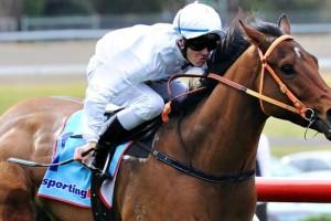 Smart dude foils plunge horse
