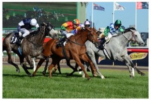 Happy Trails stuns Cup favourite