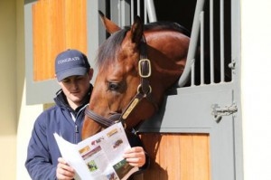 Magnificent stallions on show at this year's Vinery Open Day, August 23rd and 24th.