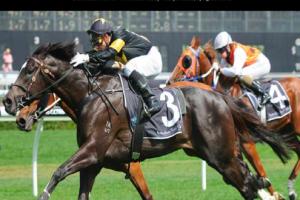 Exciting Lyndhurst stallion Better Than Ready