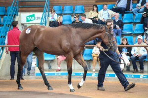 Session I of the Australian Easter Yearling Sale concludes.