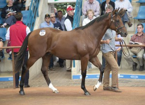 Six yearlings cracked 7 figures on Day 2 of the Inglis Australian Easter Yearling Sale.