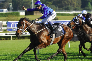 'Superstar' Winx to bid for Melbourne Cup glory