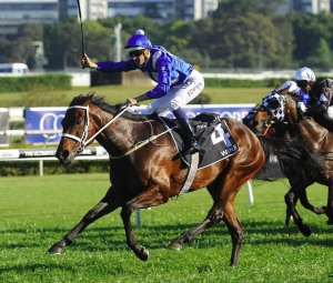 The winning machine, Winx. Photo Credit: The Race Guide