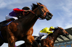 Bet safely on horseracing with Thoroughbred Village