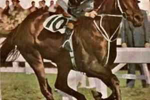 Tulloch Champion Racehorse