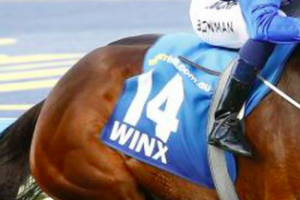 Why Bettors Love The WINX Horse