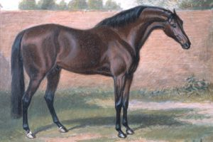 An overview of thoroughbred horses