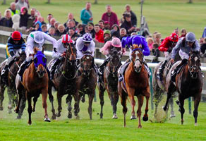 Live streaming of horse racing enhances the betting experience