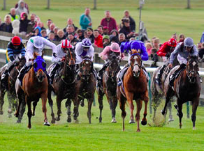 Live streaming of horse racing