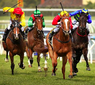 Maximise profits on horses