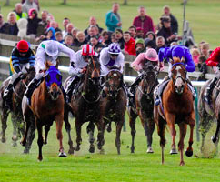 Risks associated with investments in thoroughbred horse racing