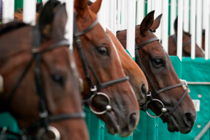Tips on horse racing betting for beginners and pros