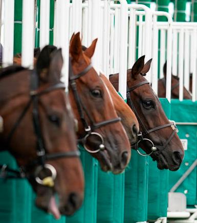 horse racing betting advice