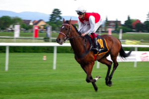 Developing the Emotional Bandwidth to Bet on Horses