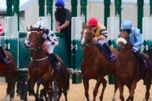 How to Build a Profitable Horse Racing Business